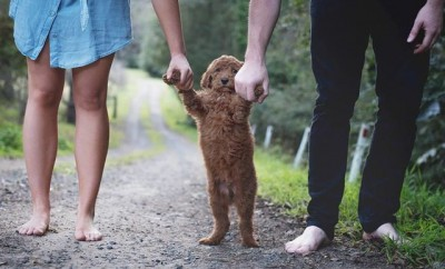 The Most Adorable Puppy Photo Shoot You've Ever Seen