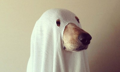 27 Dogs That Will Look Better Than You This Halloween